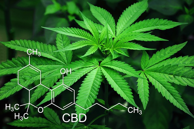 How Do You Distinguish Real CBD Oil from a Fake?